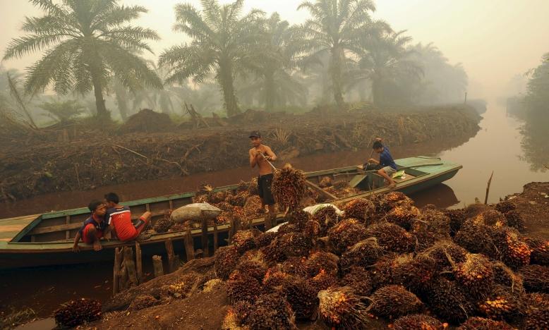 palmolie plantatie