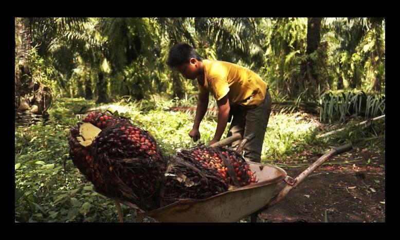 Werker op een palmolie-plantage