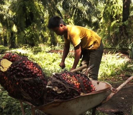 Amnesty rapport palmolie